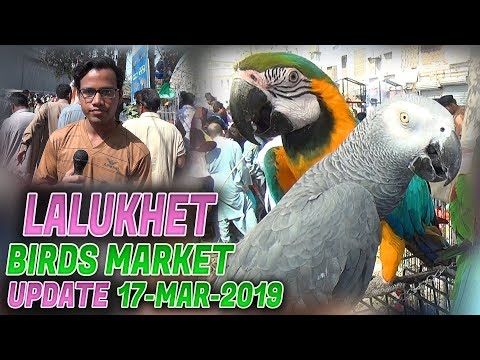 Lalukhet Sunday Birds Market 17-3-2019 Latest Updates ( Jamshed Asmi Informative Channel) urdu/hindi