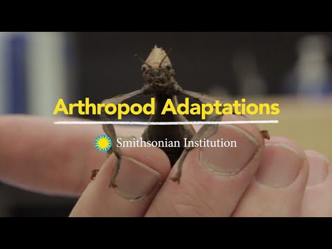 Arthropod Adaptations