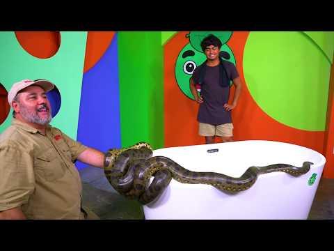 Whats in the Tub? ANACONDA Challenge