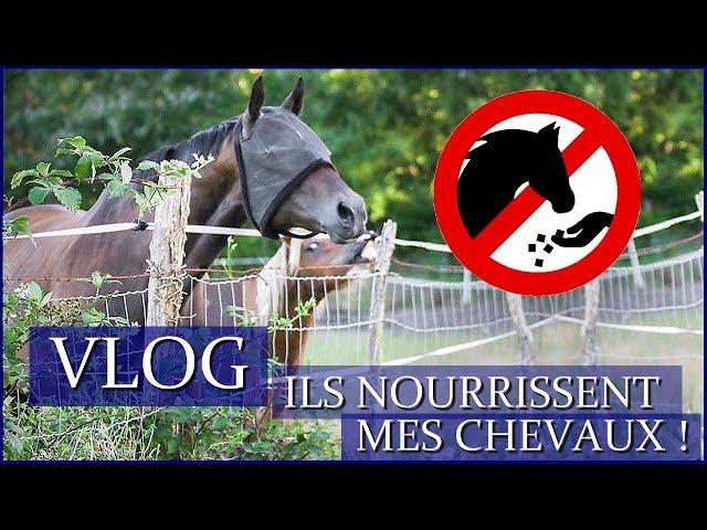 ILS NOURRISSENT MES CHEVAUX SANS AUTORISATION ! - Vlog