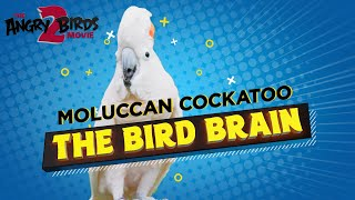 The Angry Birds Movie 2 | Bird Watching Cockatoo