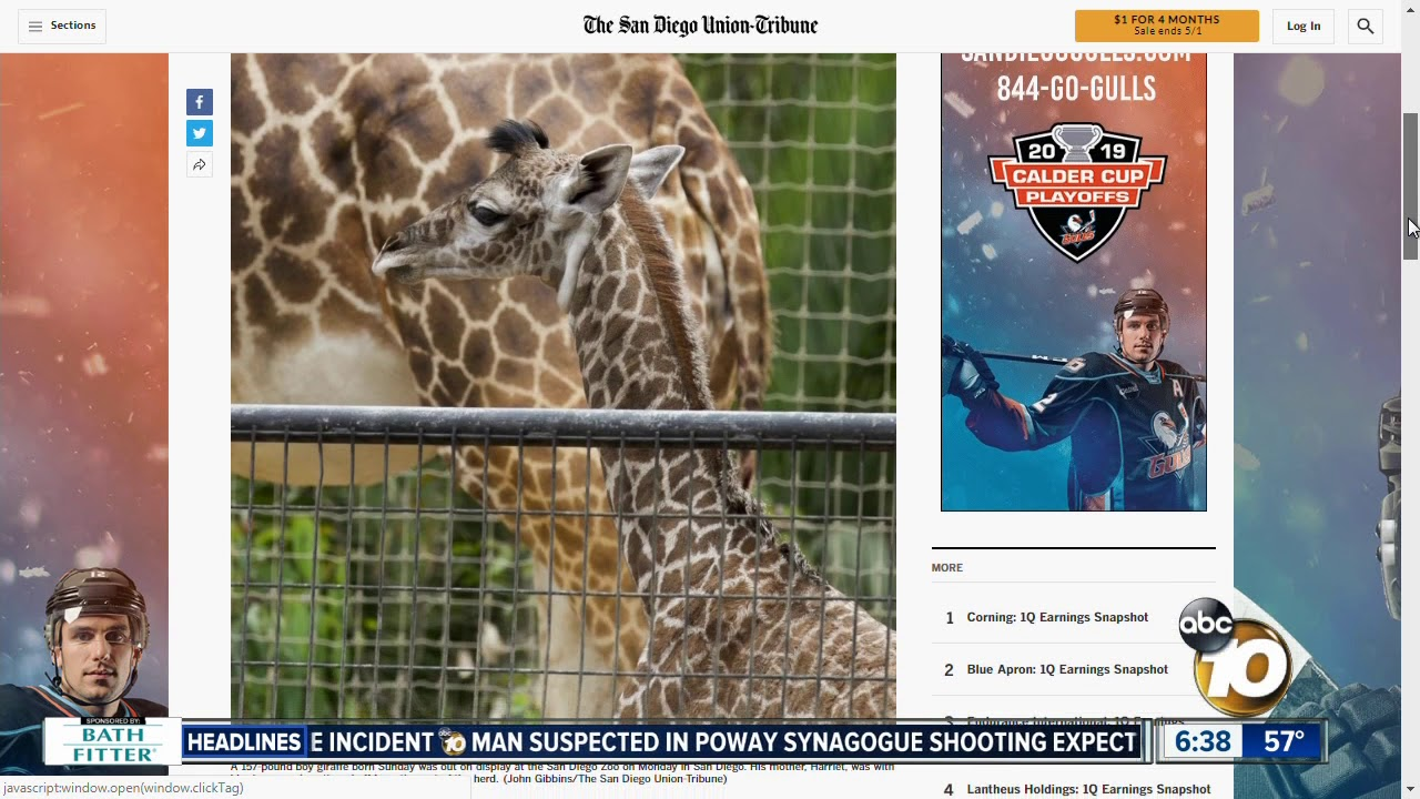Baby Giraffe Born At San Diego Zoo Youtube
