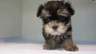 http://www.puppydream.jp.