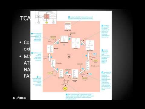 Collegiate School Biology cellular respiration.mp4