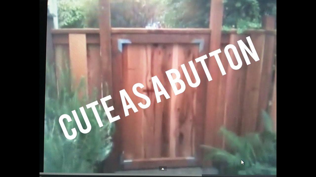 Garden Gate, How To Build, Easy, Simple Design Ideas, Cheap, Sturdy, Non  Sag   Cedar Wood   YouTube