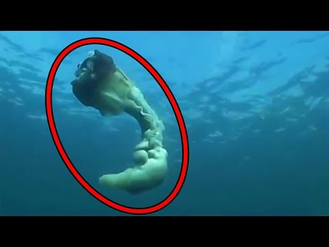Top 15 Scariest Videos Caught By Divers