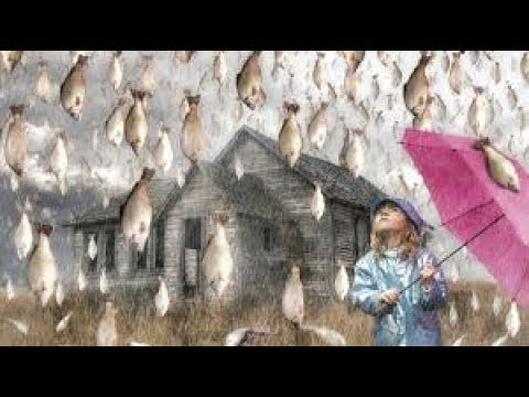 END TIME EVENTS ARE HERE   Fish Fall From The Sky In Honduras