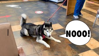 Meeka Goes To The Vet! (SHE WAS SCARED!) Vlog