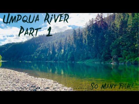 Umpqua River Madness - Nonstop Fishing Action!