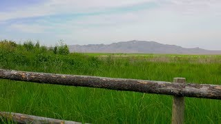 Conserving the Great Salt Lake Marshlands