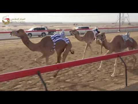 Download تأهيل الإيذاع – سيف العرب  14-1-2017– ش13 مقيظه لـ بطي سيف سعيد السبوسي 7:58 Mp4 baru