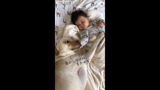 【優しいベビーシッター】赤ちゃんを頑張って寝かしつけるワンコ♪ あったかい雰囲気に心なごむ。 #Shorts
