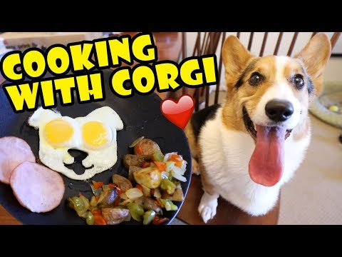 COOKING with CORGI DOG  -- Tasty Fall Recipes    Life After College: Ep. 617
