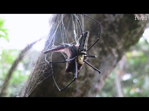 spider vs 2 birds,bat,snake,lizard,centipede,scorpion,frog,fish,mantis,etc
