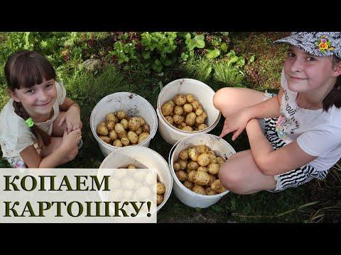 Вопрос: Почему картофель называют псевдохищным растением?