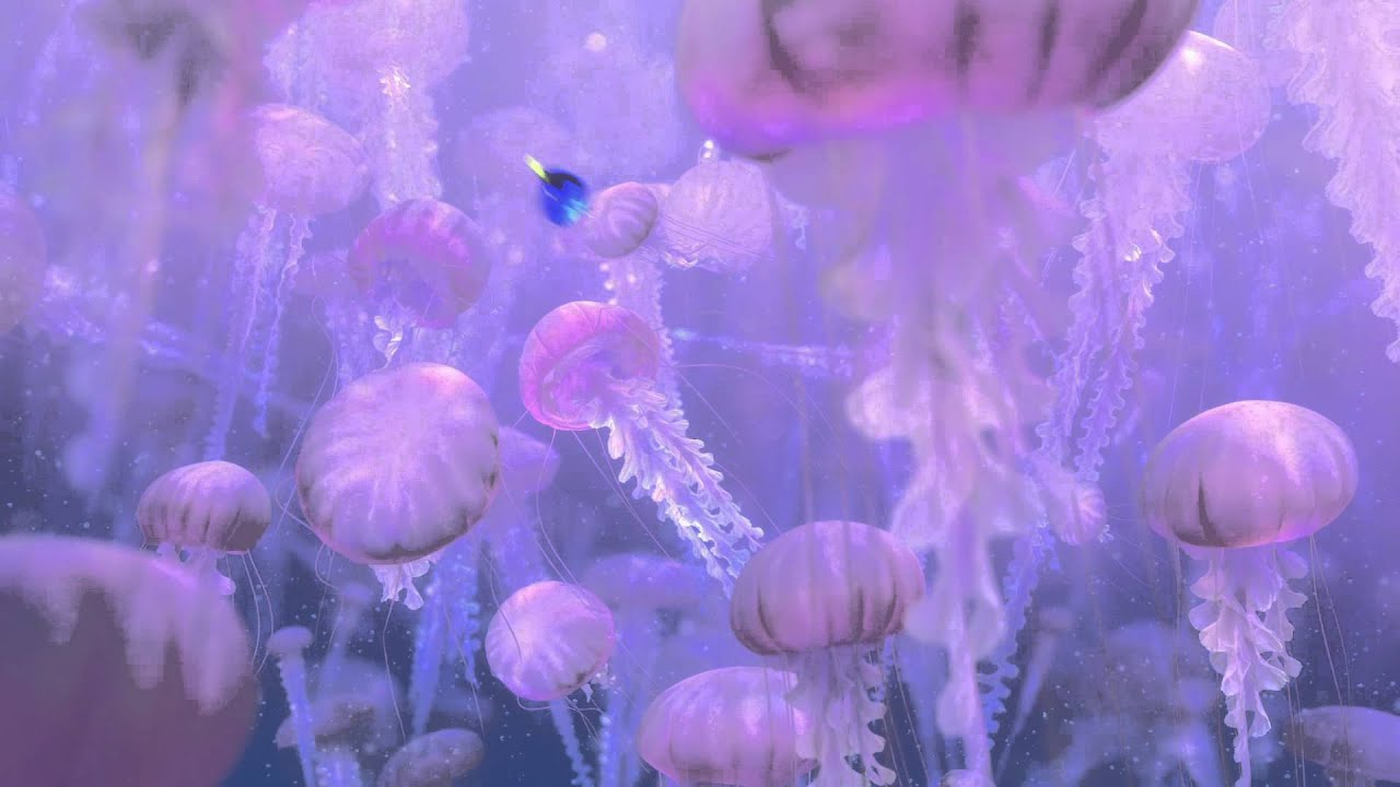 3d Orchid Wallpaper Finding Nemo 3d Clip Jellyfish Youtube