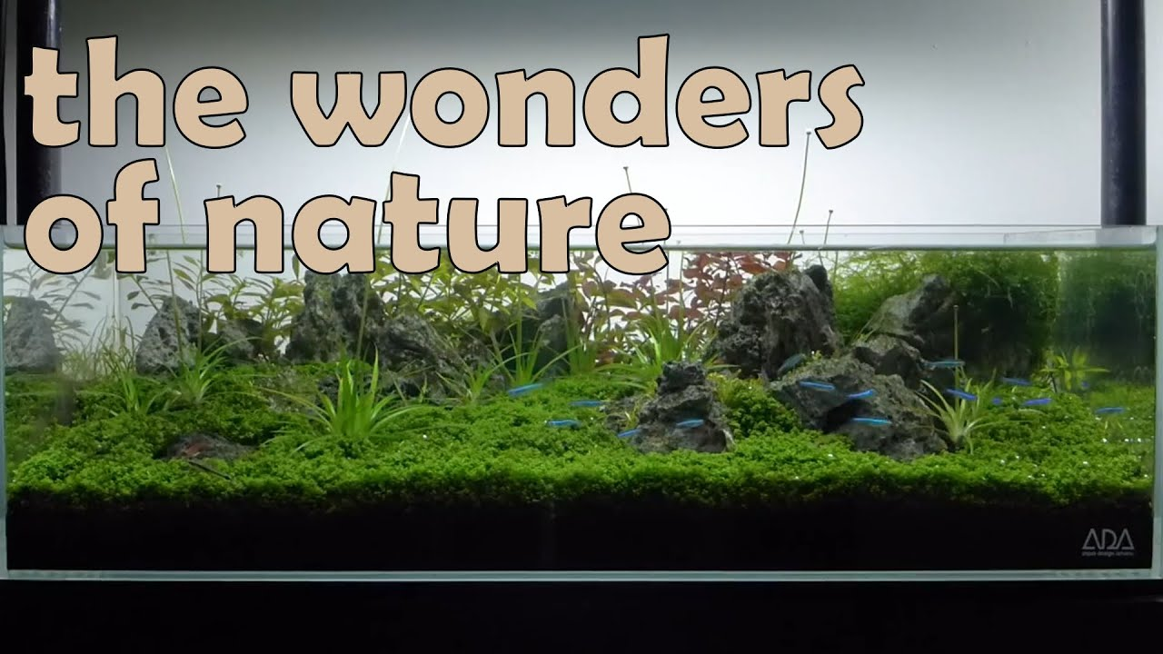Nature Aquarium Aquascape Iwagumi 3b Youtube
