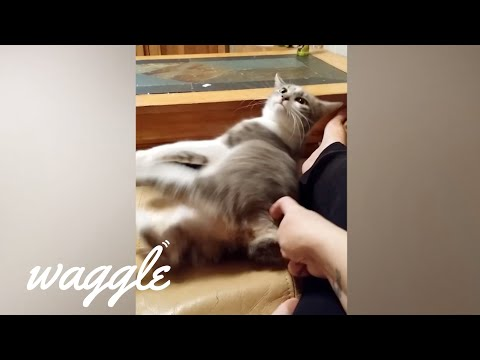 Best of Itchy Pets | Funny Animal Compilation