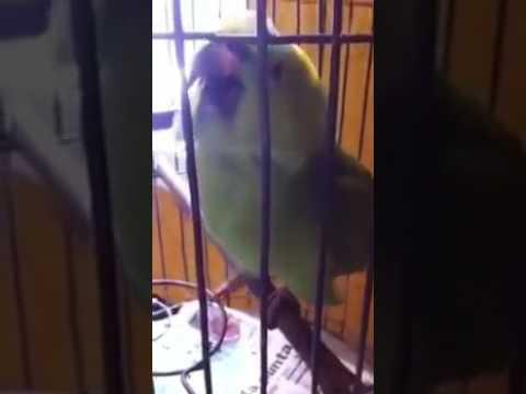 Vogel doet baby na