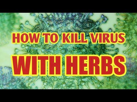 antiviral-herbs