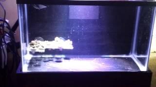 Reef Radiance Dm36e Full Spectrum Dimmable Par38