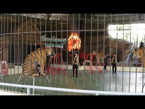 At the tiger show