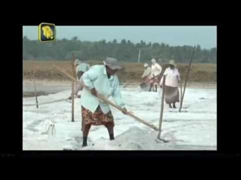 Mr Ayub Khan Chairman Of Lanka Salt Ltd Hambantota.