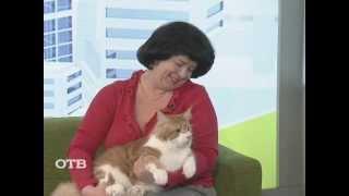Мейн Куны: кот в кредит (15.02.13)