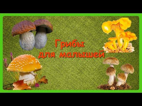 ГРИБЫ ДЛЯ МАЛЫШЕЙ 🍄Учим с детьми грибы/ Развивающий мультфильм/КАРТОЧКИ ДОМАНА