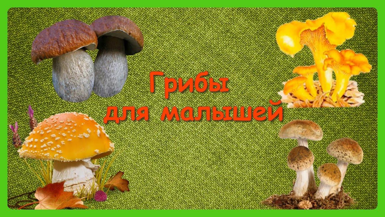 ГРИБЫ ДЛЯ МАЛЫШЕЙ 🍄Учим с детьми грибы/ Развивающий ...