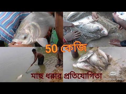 catching a monoster katla fish in westbengal,india