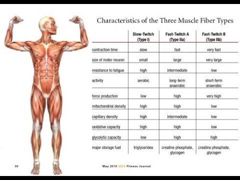 Understanding Muscle Fiber Types Slow Twitch Vs Fast Twitch Youtube