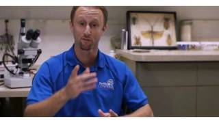 Get Rid of Bugs & Pests with Jeff White | Pest Control