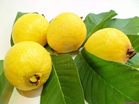 فوائد روق الجوافة للجنس وللصحة ولبشرة ولشعر وزيادة المناعة Youtube