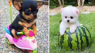Baby Dogs  Cute and Funny Dog Videos Compilation #5 | 30 Minutes of Funny Puppy Videos 2021