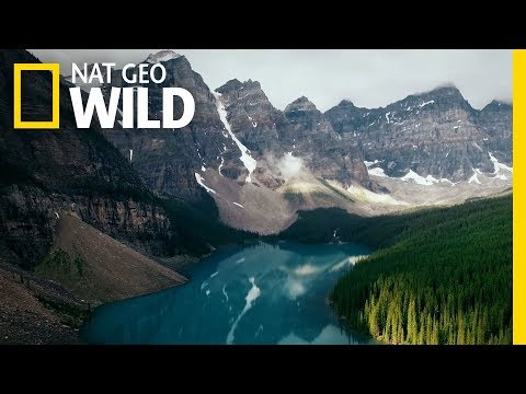 A Celebration of Wildlife and Nature   Symphony For Our World