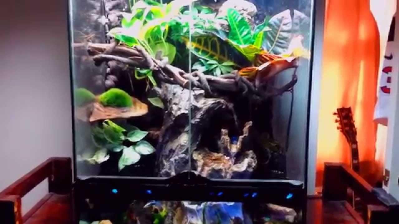 crested gecko paludarium vivarium terrarium update