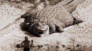 DÜNYANIN EN BÜYÜK TİMSAHI YAKALANDI. Yakalanan En Büyük Hayvanlar.