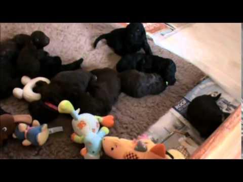 Hallie`s pups at 19 days old