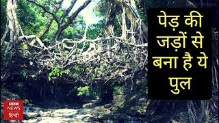 Root Bridge of Meghalaya Is An Attraction Point for Tourists (BBC Hindi)