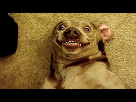 Funniest  Dogs and  Cats - Awesome Funny Pet Animals' Life Videos