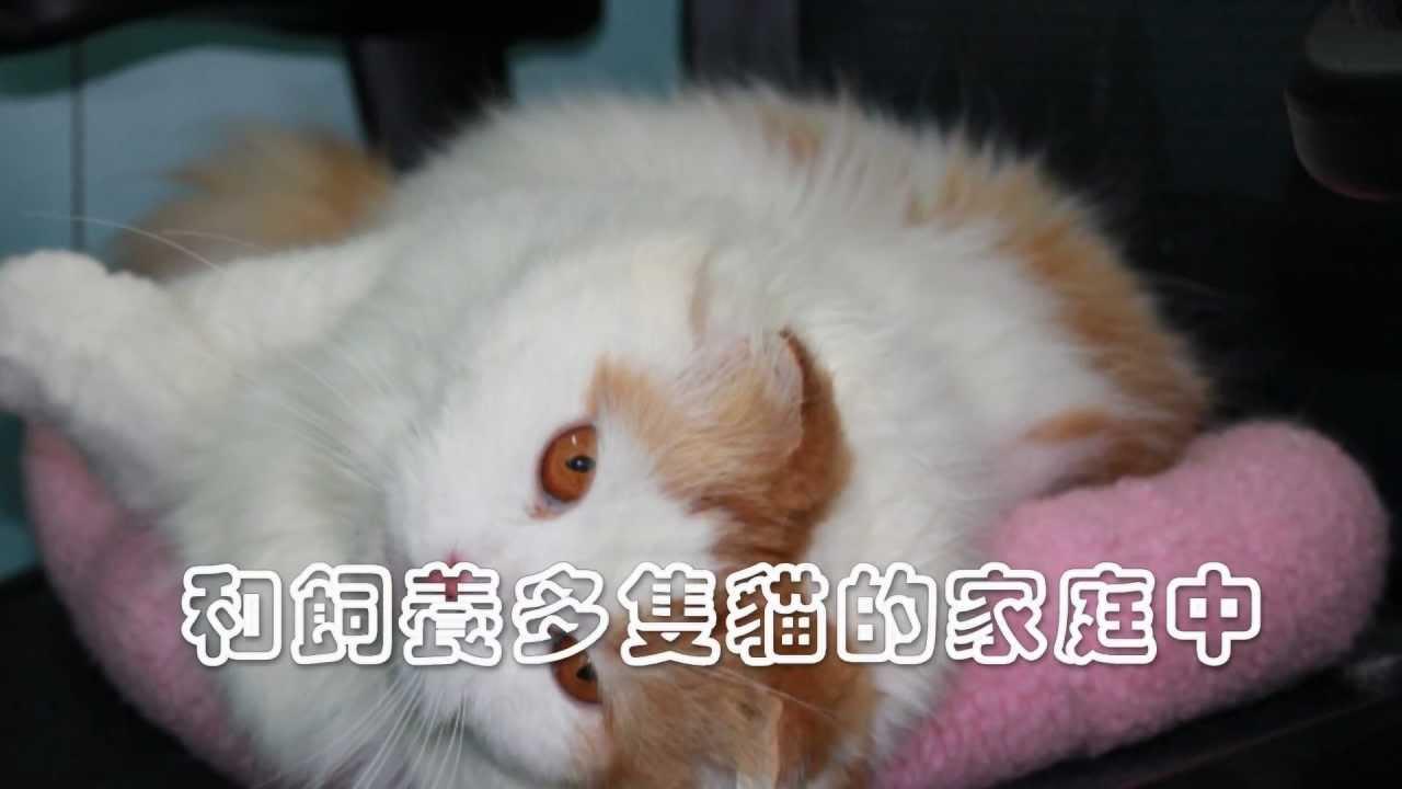 貓傳染性腹膜炎.mpg - YouTube