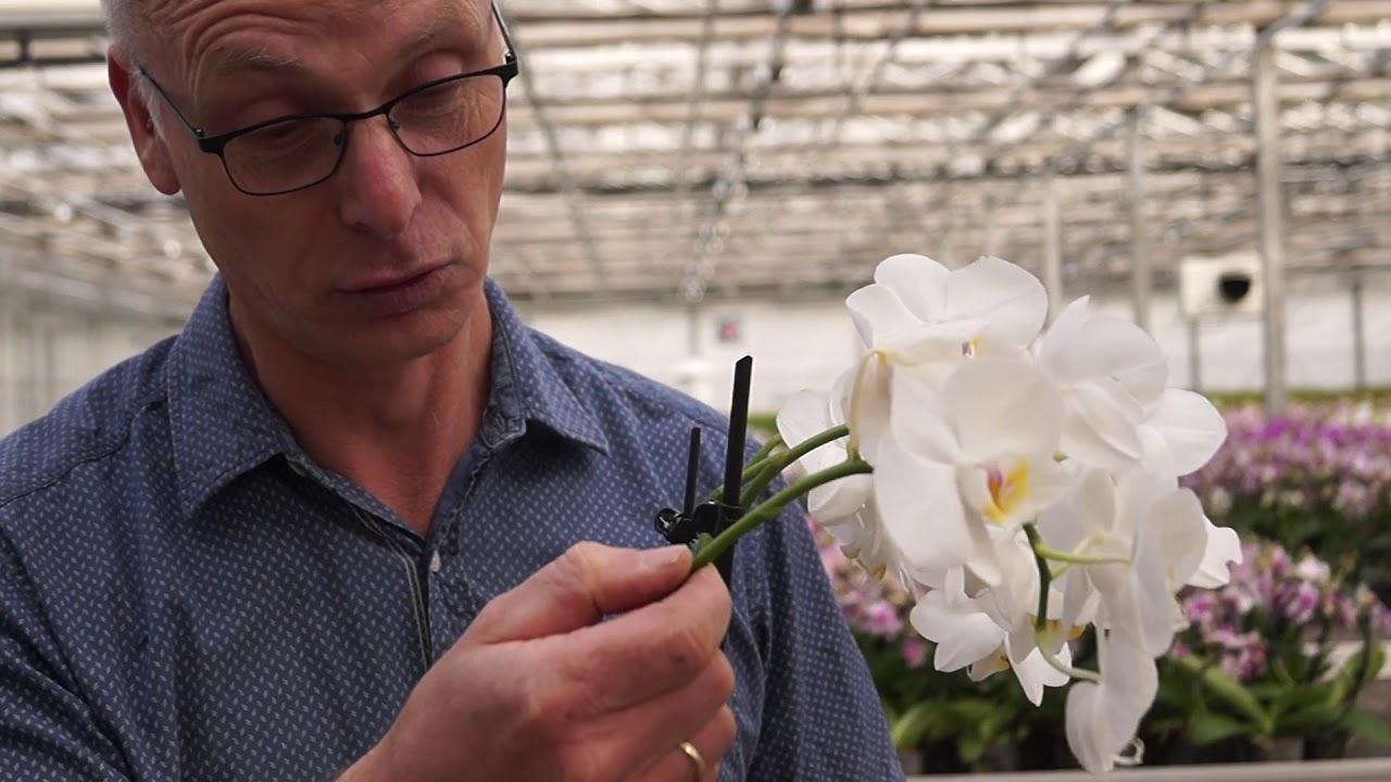 Orchideen Pflege. Wie Schneide Ich Orchideen Zurück