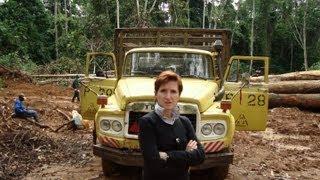 Tt1 - Logging Experience - Congo Basin