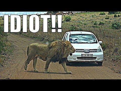 IDIOT ON SAFARI   RENTAL CAR SAFARI!