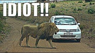 Idiot On Safari | Rental Car Safari!