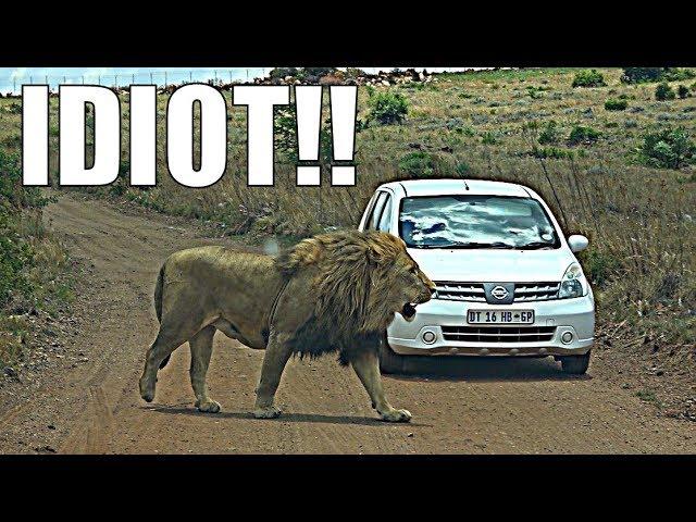 idiot-on-safari-rental-car-safari