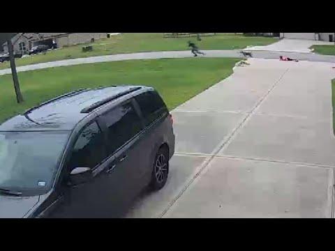 Un vecino salva a un niño de 6 años que estaba siendo atacado por un pitbull