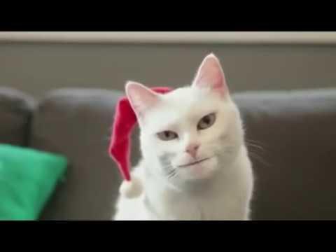 Cat singing jingle bells