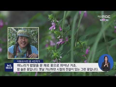 여름에 만난 꽃빛.. 홍도의 야생화 - R(200918금/뉴스데스크)